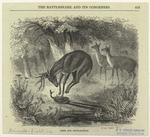 Deer and rattlesnake