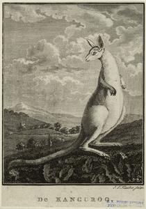 De kanguroo.