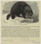 The Sea-Otter.