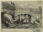 [Pigs at a farm.]
