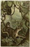 Pumas In Forest With Monkeys Hanging From Trees.