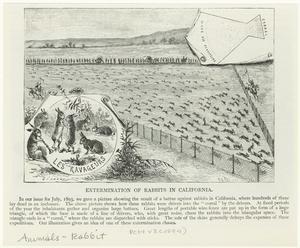 Extermination of rabbits in California.
