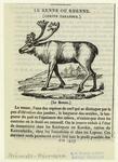 Le renne ou rhenne (Cervu