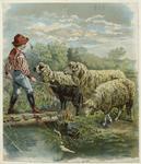 Boy Herding Sheep.