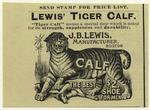 Lewis' tiger calf.