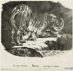 Tigerin.
