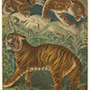 Felis tigris -- tiger ; Felis onca -- jaguar.