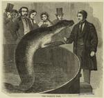 The Talking Fish.