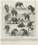 Elephant Tricks.