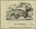 The foumart.