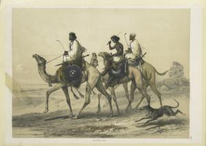 Abâbdeh riding dromedaries