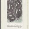 Loie Fuller et son Ecole de Danse (program)
