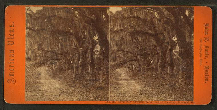 Fascinating Historical Picture of Bonaventure Cemetery in 1850