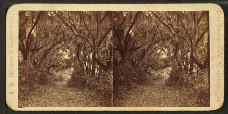 Fascinating Historical Picture of Bonaventure Cemetery in 1860