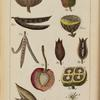An introduction to botany... Pl. V