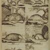 [Animals including squirrel, stoat, rat, dormouse, mole, mouse, bat, shrew mouse.]