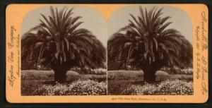 The Date Palm, Pasadena, Cal., U.S.A.