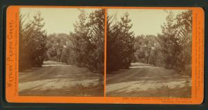 South Avenue, leading from T.H. Selby's Residence, Fair Oaks, Cal.