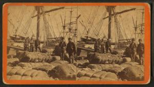 [African-American longshore men and bales of cotton on the dock.]