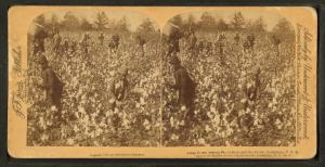 "Away down among ""de cotton and de coons,"" Louisiana, U.S.A."