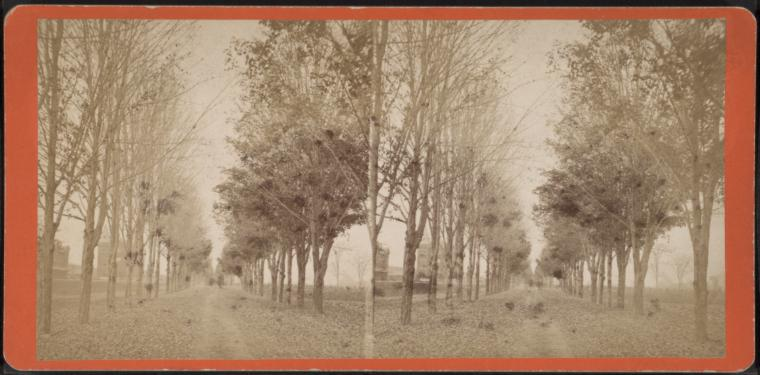 [Tree lined avenue.]