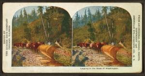 Logging in the state of Washington.