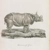 Rhinoceros of Africa