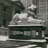 Photograph of the northerly lion showing an exhibition display case mounted along the side of lion's pedestal, ca. 1935-37.