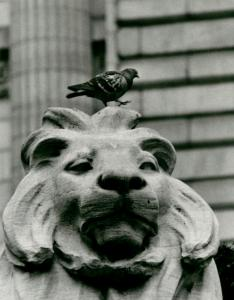 """Pigeon on New York Public Library."""