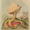 An Excrescence; – a Fungus; – alias – a Toadstool upon a Dung-hill.