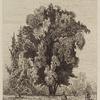 Figures beneath a large tree