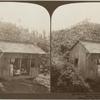 A Native Country School House among the Banana Trees, Jamaica.