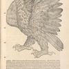 Aquila page 163
