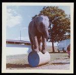 Hamid-Morton Circus
